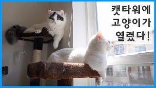 캣타워에 고양이가 열렸다! - 조망권으로 알 수 있는 고양이 서열