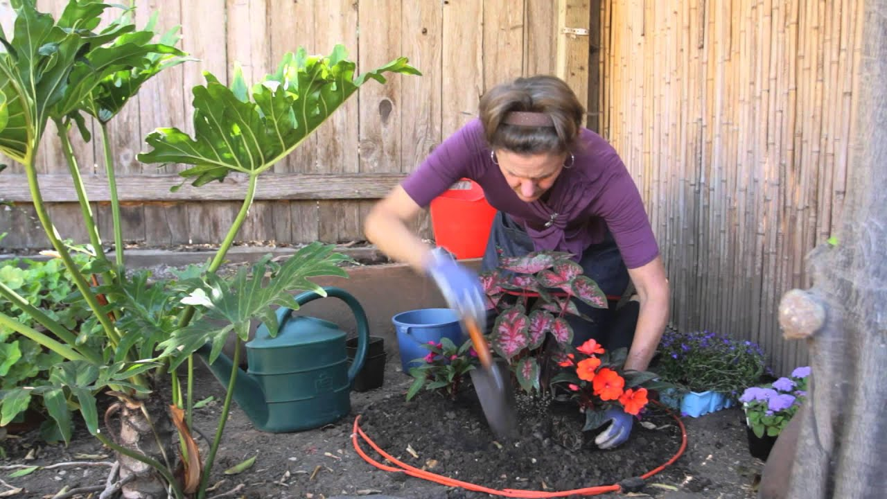 How to plant a round flower bed full of annuals for Planting a garden