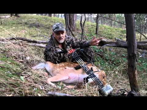 Bow Hunting Fallow Deer