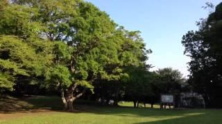 バードウォッチング Bird Watching ,Beautiful Park,JPN