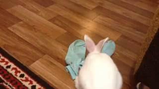 Кролик делает уборку в доме