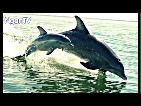 The Most Adorable Animal Parenting Moments YouTube - 22 adorable parenting moments in the animal kingdom