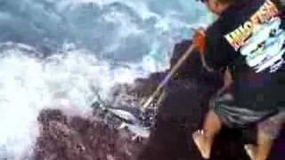 ahi yellow fin tuna off south point bigisland