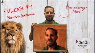 Leeuwenvlog #1 - Nieuwe leeuwen!