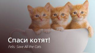 Некогда объяснять, спасай котят!
