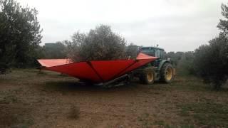 recogida de aceituna con tractor con vibrador delantero en olivar aove lasolana2