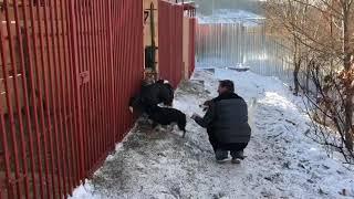 Фонд Умка: свободные прогулки собак на нашем участке