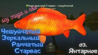 Русская рыбалка 4 РР4 озеро Янтарное КАРП Чешуйчатый Зеркальный Рамчатый Старвас