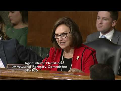 Senator Deb Fischer Questions Witness On Cattle Markets Following Fire At Holcomb, KS, Beef Plant