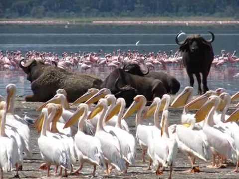 Lake Manyara National Park - Lake Manyara