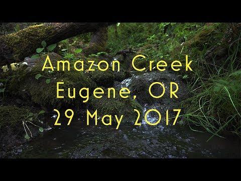 Amazon Creek - Eugene, OR
