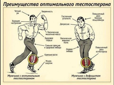 Тестостерон и алкоголь