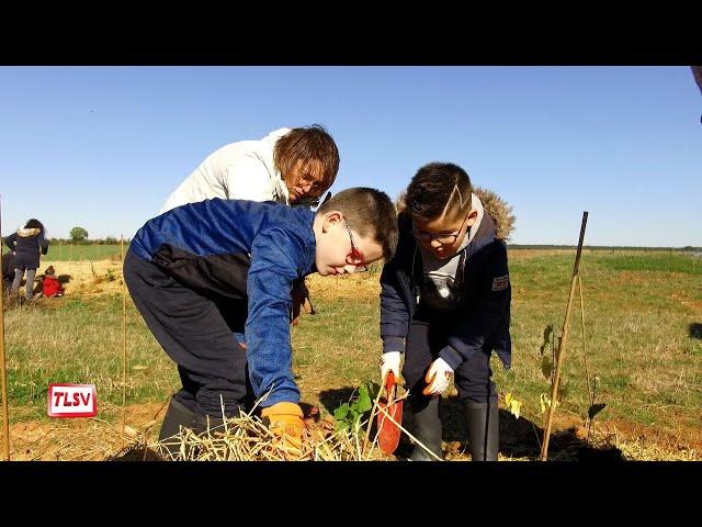 Luçon. 1 200 arbres plantés par les enfants à l'entreprise Louineau