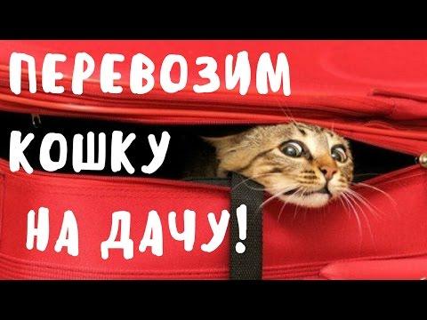 🐱Как перевезти кошку на дачу!How to carry the cat!🐾🐾