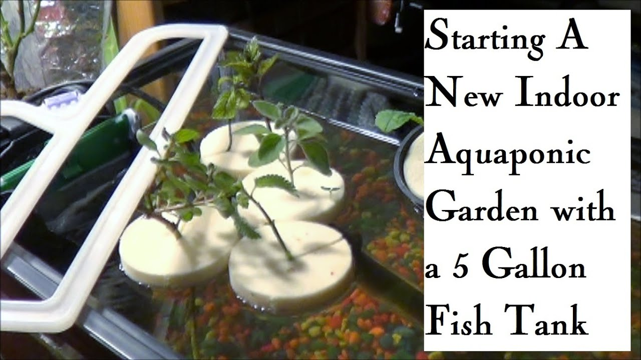 Self Cleaning Fish Tank Garden Starting An Indoor Aquaponic Garden In A 5 Gallon Fish Tank Youtube