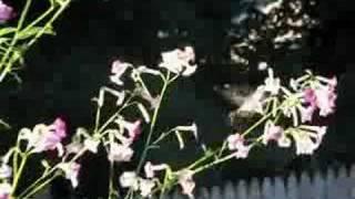 hummingbird using flowers