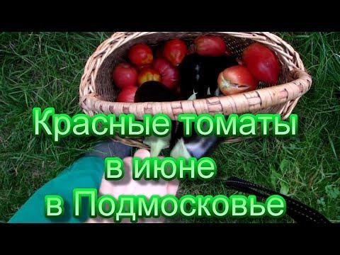 Урожай помидор собирете уже в июне,если посадите этим простым способом!