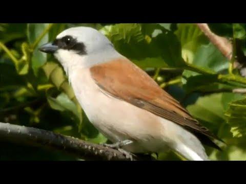 Страна птиц. В поисках невидимки