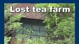 Lost tea farm ロスト日本緑茶農場 - Abandoned Japan 日本の廃墟