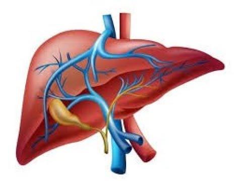 EMP Fisiología del hígado - YouTube