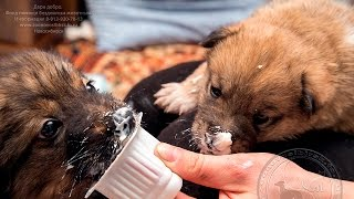Щенки сиротки в частном приюте Дари добро Новосибирск | Счастливые животные радуются людям