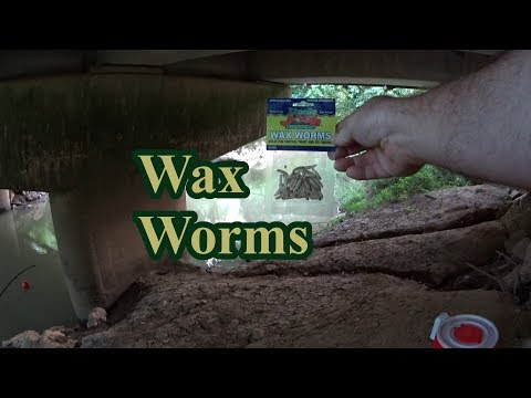 Fishing With Freeze Dried Wax Worms