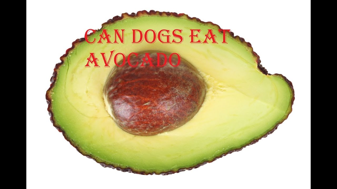Can Dogs Eat Avocado | Visit www.dogsora.com - YouTube