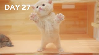 Day 27 - Baby Kittens Try to Stand | Day 1 to Day 100 Kittens Grow Up Vlog