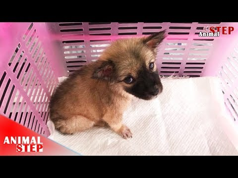 Sick Abandoned Puppy Rescued from Trash Pile, He's Now so Blissful
