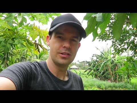 Connecting With Nature - Canggu, Bali - June 2017 🇮🇩