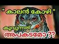കാലൻ കോഴി കൂവിയാൽ മരണം   Kaalan Kozhi Motteled Owl   Owl And Death   Churulazhiyatha Rahasyangal