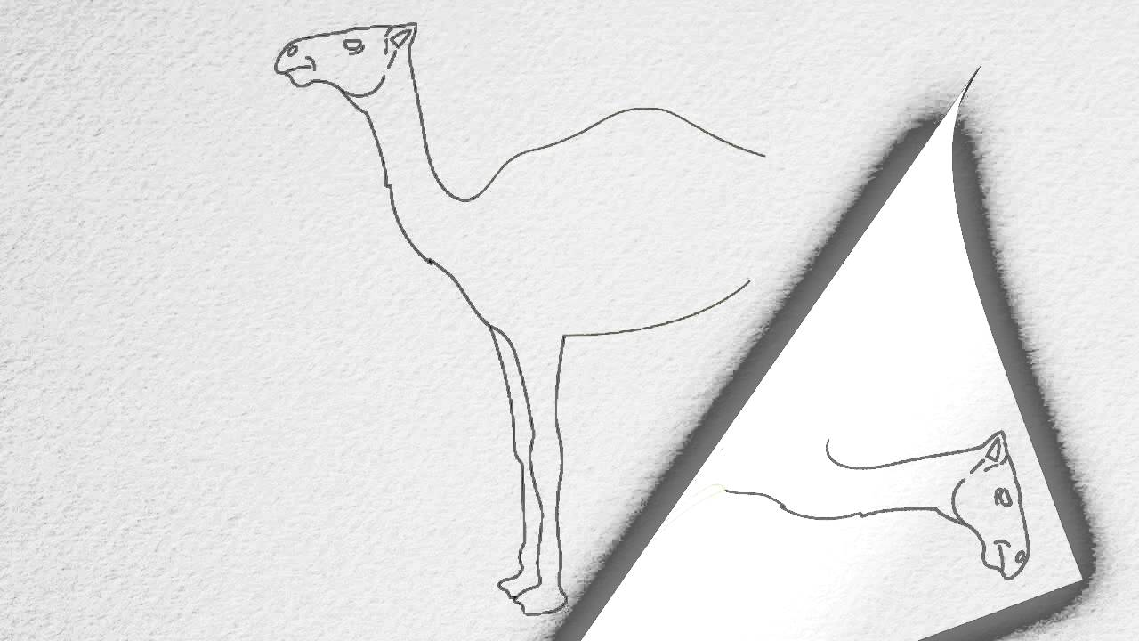 how to draw a camel step by step youtube
