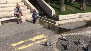 Güvercin koştururken kendimizden geçiyoruz