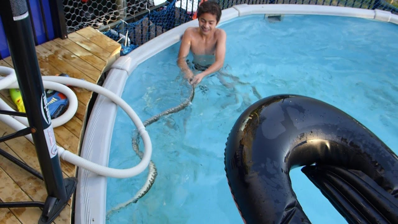 kids swimming with a lethal snake in the pool youtube