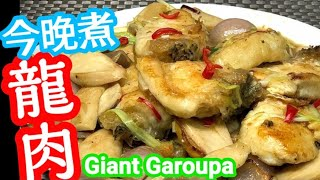 Stir-Fried Giant Garoupa with King Oyster Mushrooms🐠Great Fish Dish For Festivals!🎉龍躉 去街市買龍躉🐟 處理龍躉方法