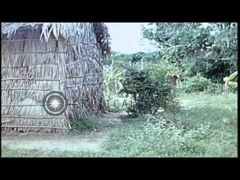 A Vietcong is shot dead by ARVN cadets as he attempts to flee during a simulated ...HD Stock Footage