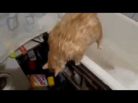very fat cat can't get out of the tub