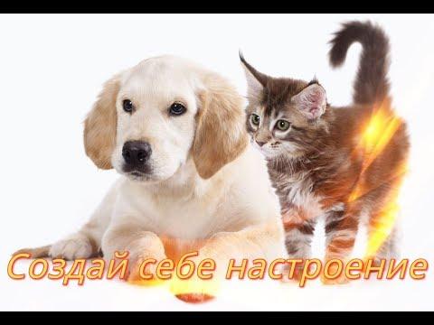 Подборка приколов про собак и кошек (Время 6:23)