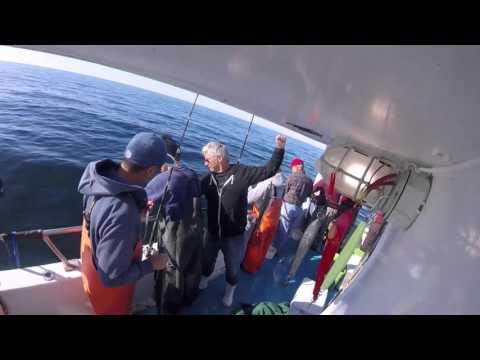 Offshore Fishing On Eastmans
