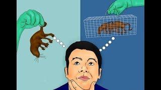 КАК ИЗБАВИТЬСЯ ОТ МЫШЕЙ / 7 способов как избавиться от мышей