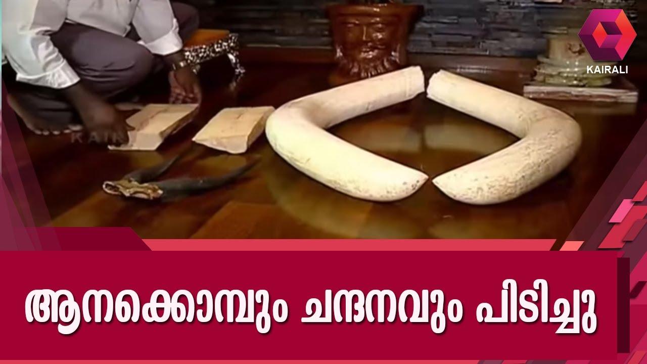 Elephant Tusk & Sandalwood Worth 10 Lakhs Caught In Kochi