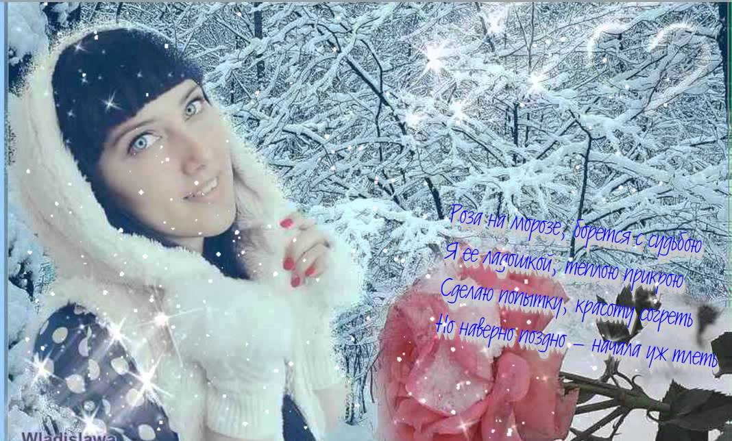 Николай мудрый роза на морозе