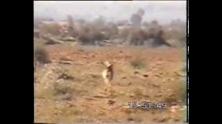 1997 - India Rajastan - Cerbiatti indiani (indian deer) - Animali in esclusiva su #supergreen
