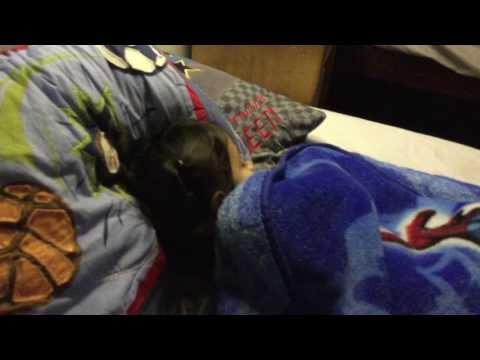 Little sister going to sleep on my bed thumbnail