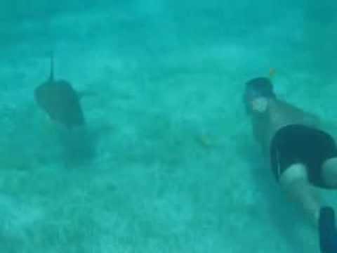 PLongée avec les tortues aux Grenadines