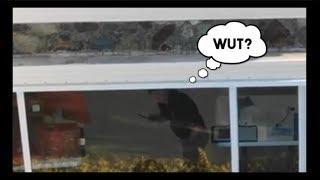 Drone Spies On Epstein Island DURING FBI Raid