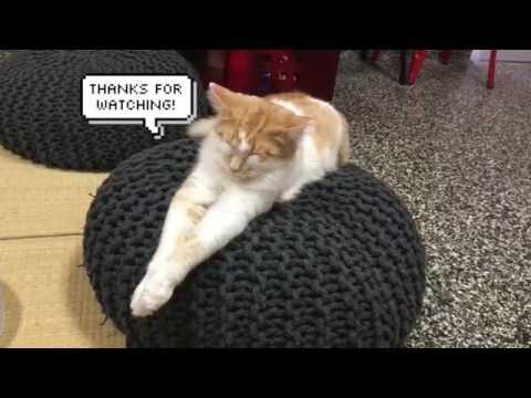 Cat Cuddle Cafe in Brisbane!