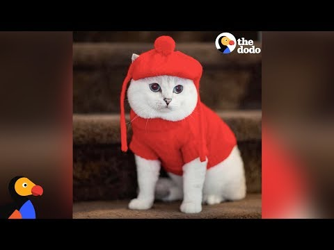 This Cat Is A Supermodel - WHITE COFFEE CAT | The Dodo