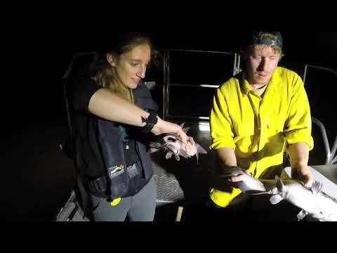 Lake Shenandoah Fishing Report