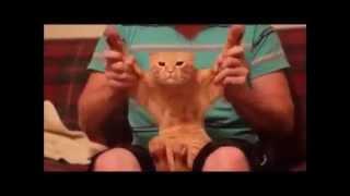 Gatos y perros Chistosos